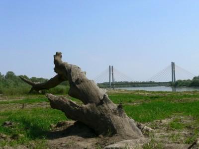 widok na Most Siekierkowski