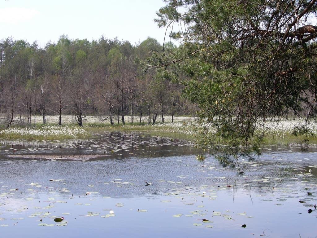 6. Rezerwat Czarci Dół